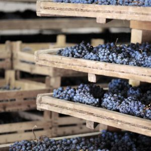 druiven amarone Bulgarini