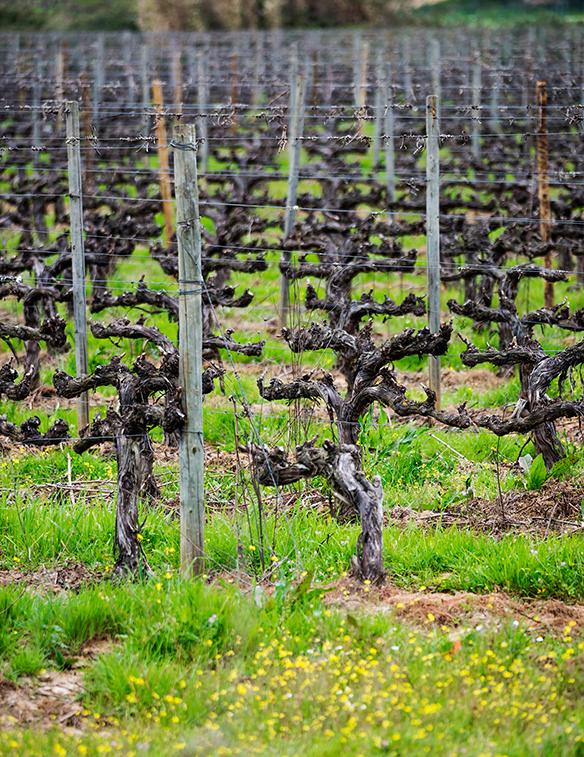 Wijngaard Coelheiros Portugl